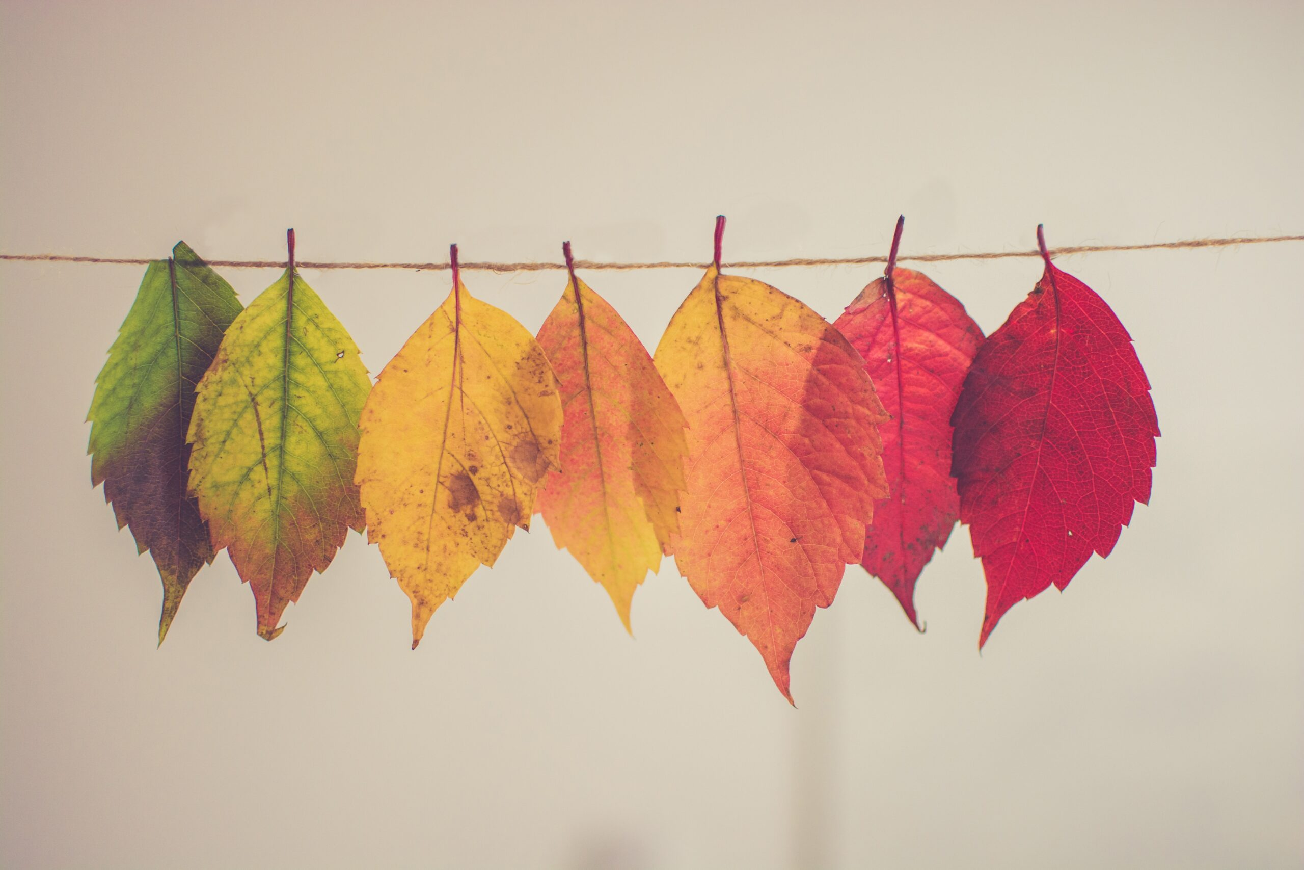 5 Reasons to Get Married in Autumn